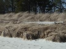 March+dunes