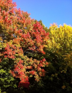 Foliage shot #4 cropped