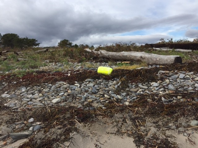 The storms that blew through this past week left interesting detritus behind