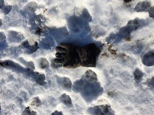 lost-glove